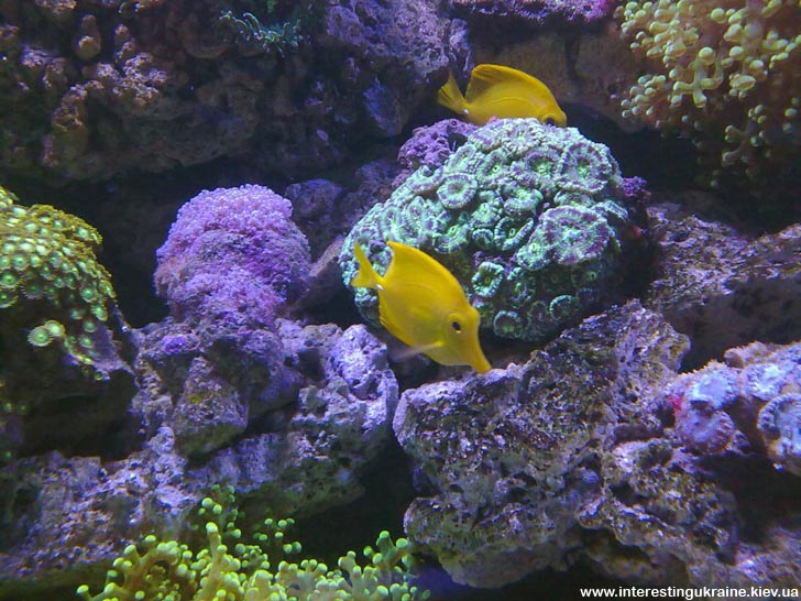 Поездка в Киев. Океанариум - подводный мир.