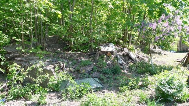 Фундамент-погреб усадьбы в Ходоркове спрятался под деревьями