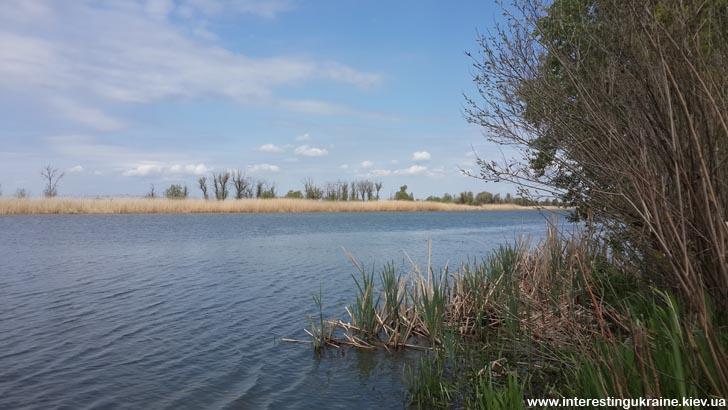 Река Днестр в Одесской области