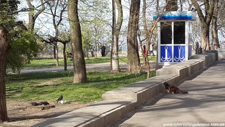Одесский кот на охоте