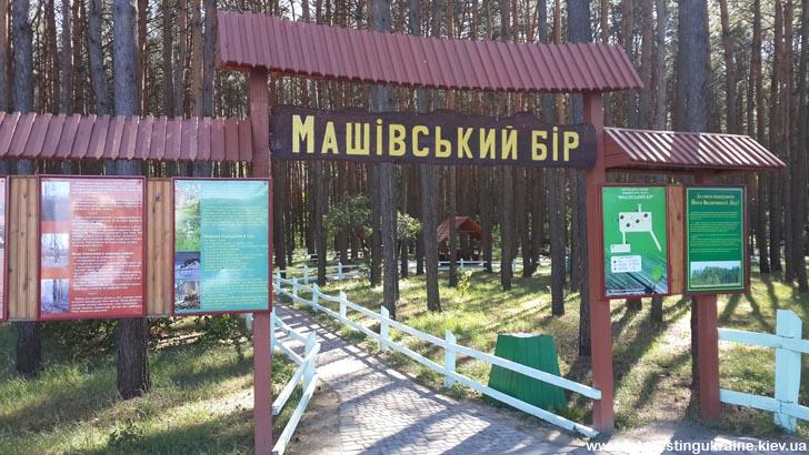 Машевский Бор - достопримечательность Машева Волынской области