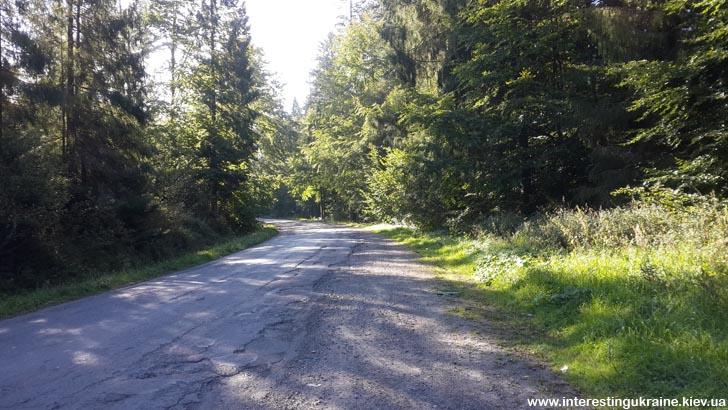Дорога в Карпатах