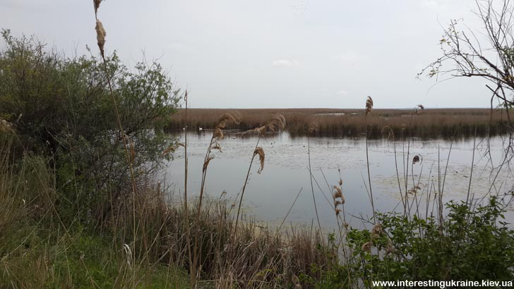 Природа Одесской области