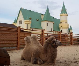Зоопарк 12 месяцев - достопримечательность Киевской области